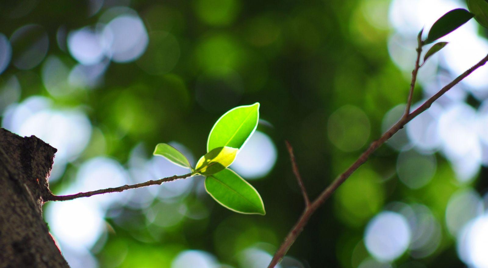 inwentaryzacja zieleni kraków