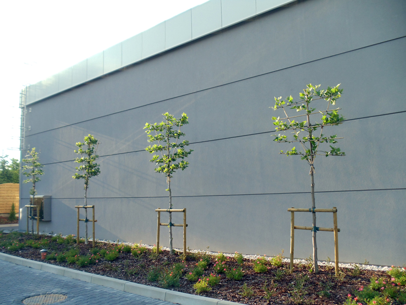 drzewa-w-mieście