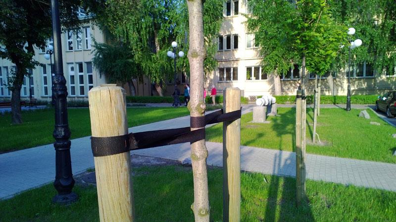 drzewa w mieście projekt zieleni