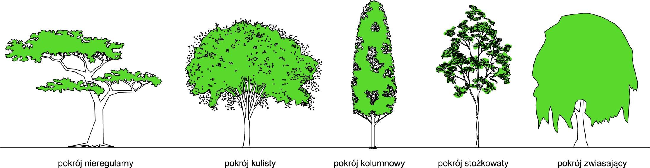 pokrój-drzewa