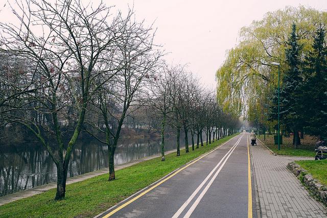 drzewa projekt zieleni