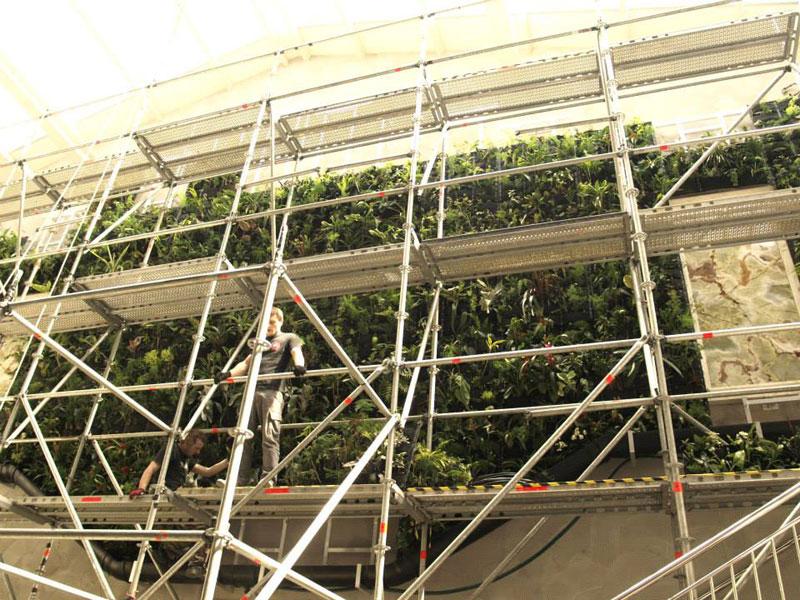 zielona ściana - żywy ogród wertykalny