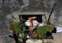 warzywniak projekt zieleni