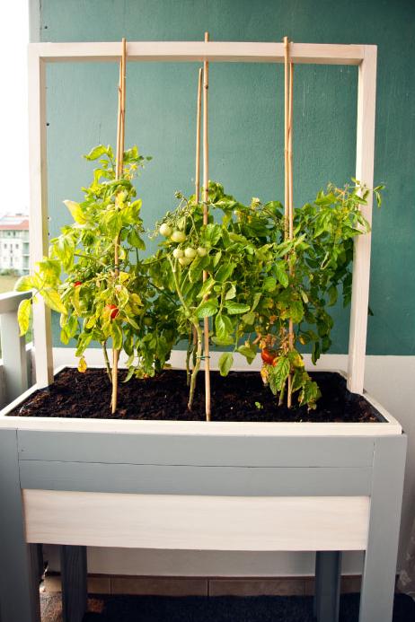 warzywnik projekt w donicy balkonowej