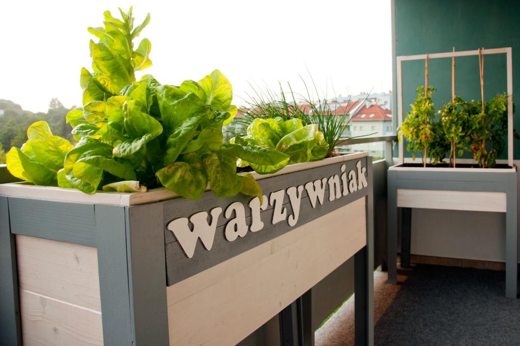 warzywnik projekt na balkonie