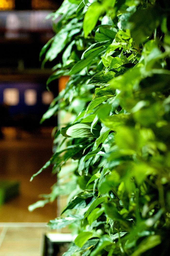 zielone ściany w biurach