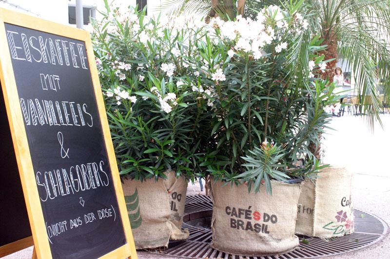 rośliny-do-kawiarni