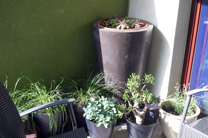 suchulenty-na-balkonie