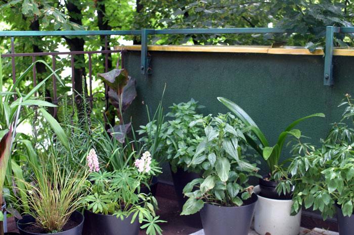 zioła na balkonie obok roślin ozdobnych