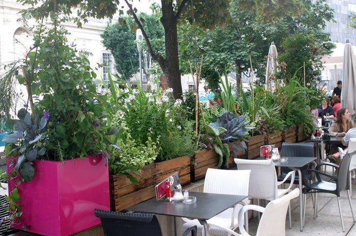 projekt tarasu - jakie rośliny wybrać