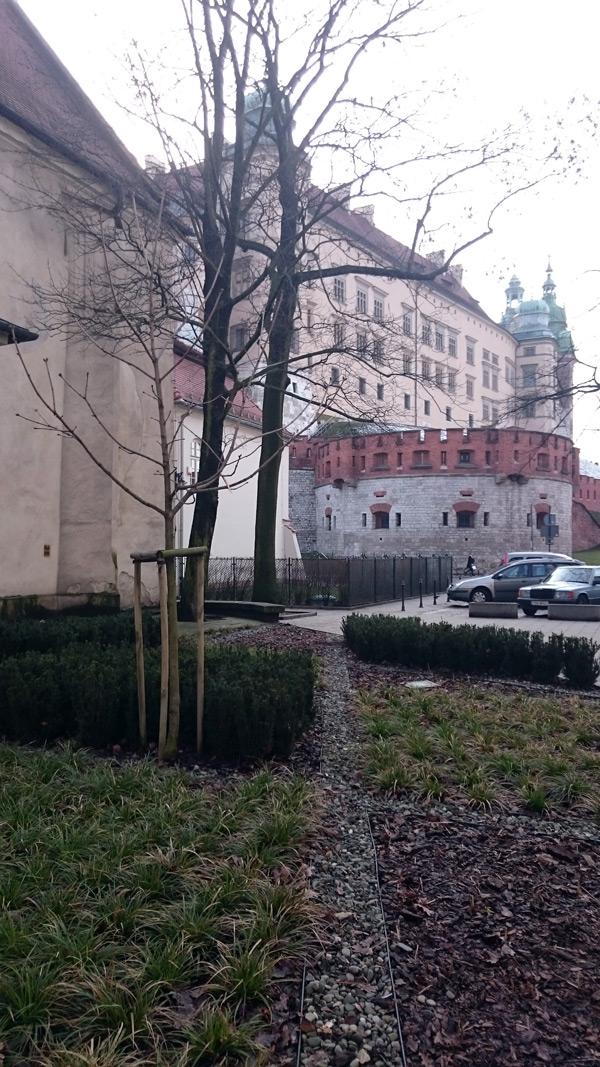 nasadzenia na krakowskim skwerze-1
