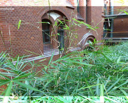 bambus-roślina-do-wnętrz
