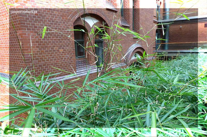 Bambusy we wnętrzach