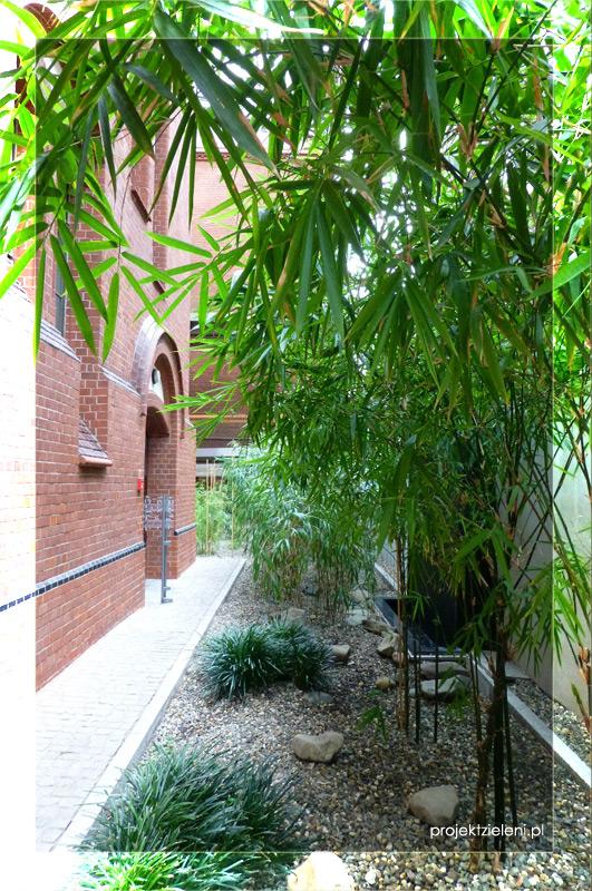 Bambusy we wnętrzach-w-holu-głównym-akademii-muzycznej