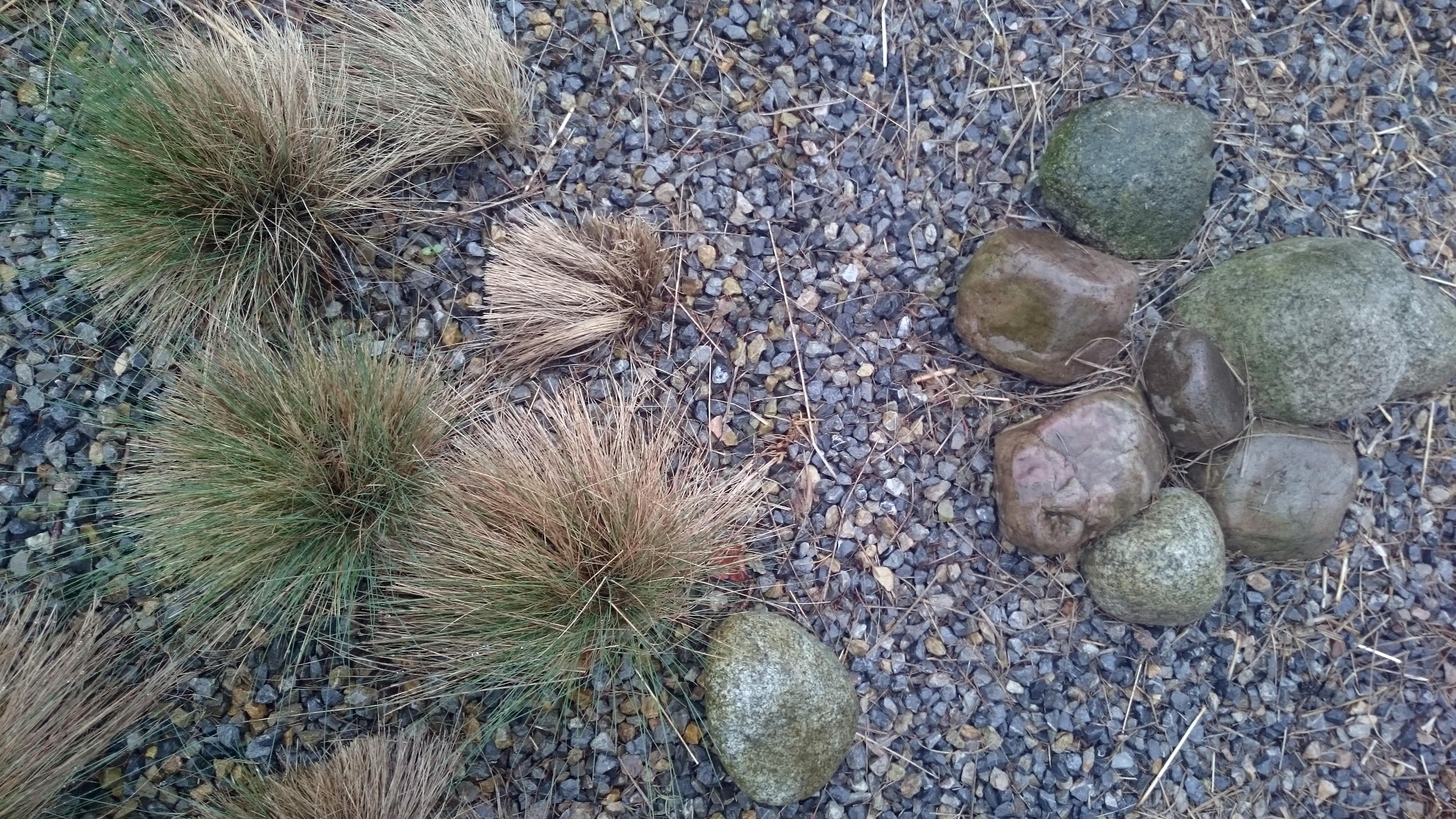 trawy w ogrodzie wodnym