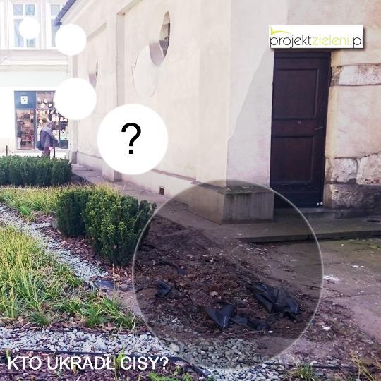 zniszczone-krzewy-w-Krakowie-2