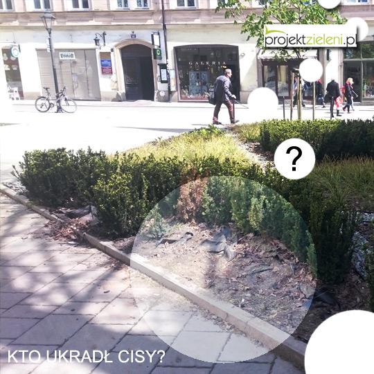 zniszczone-krzewy-w-Krakowie