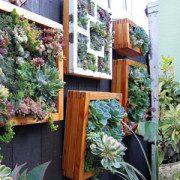 zielona ściana zrób to samemu DIY